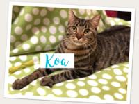 ADOPT US... Stormy & Koa are available for adoption at