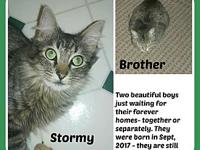 STORMY & BROTHER's story STORMY & BROTHER - NEED THEIR