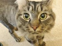 Stormy is a handsome 2 year old boy looking for love.