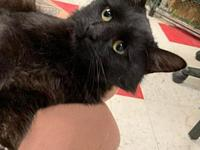 My story Are you looking for a sweet, loving lapcat?