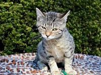 STORMY GIRL's story This beautiful tabby is named