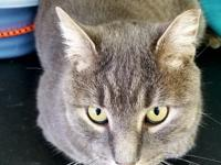 STORMY is a super sweet 3 year old gorgeous tabby boy