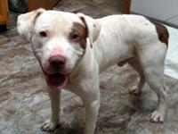 Stray male, white with brown markings,  This boy has