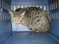 STRIPES's story Hello! I`m new to the shelter! Please