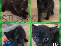 Stubby's story Appropriately named Sir Stubbs The Nubs