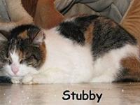 Stubby's story ~~Stubby came from the same home as