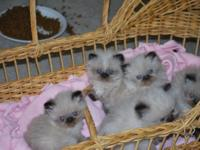 Hi there! These little darlings were born July 2, 2015,
