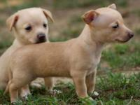 >Quality, registered puppies with amazing pedigree.