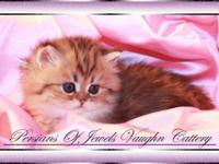 Persians Of Jewels Vaughn Cattery A CFA Registered