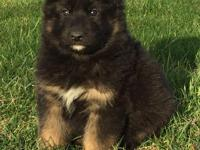Gorgeous pup who will be ready for his new home MAY 10,