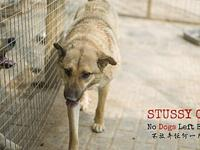 My story Meet Stussy! Stussy was rescued from a dog