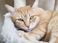 SUE DEE's story If you are looking for a cat who purrs,