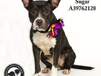 Sugar's story All dogs in the adoption program are