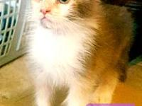 Sugar's story The adoption fee is $85.00 with an