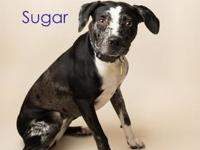 Sugar's story Well hi! let me introduce myself, the