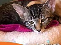 Sugar Cookie's story Did you know that the Enid SPCA