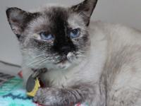 Sugar is a senior cat brought to safety after being