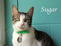 Sugar's story Sugar is a sweet affectionate girl who