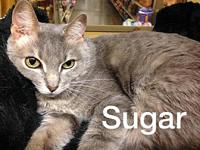 Sugar's story Sugar is a petite, affectionate little