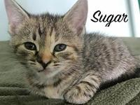 Sugar's story About Sugar: My name is Sugar, and I am 5