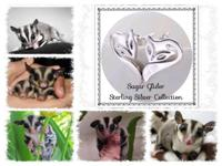 """Love your Glider, Love your Life"" Sugar Glider Silver"