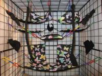 Sugar glider, rat, small animals cage sets. We have