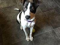 Sugar's story Sugar is a 1 year old spayed female ready