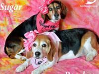 Meet Peaches and Sugar! These 2 sisters lost their home