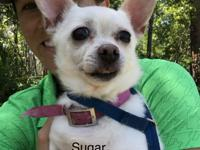 Hi! I'm Sugar. I was an owner surrender. I am 10 years