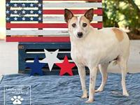 Sugar Plum's story Sugar Plum is a female jack russell