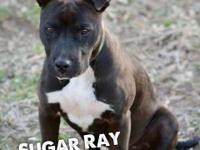 Sugar Ray! What name for such a special boy! Sugar Ray