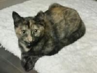 Sugar is very playful and loves attention. She is a