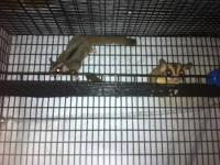 hi there i have 2 male sugar gliders both males father
