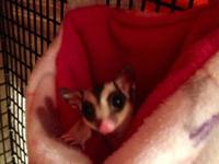 I have two young sugar gliders I would like to re-home.