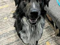 Sully's story Meet Sully. This gorgeous Border Collie
