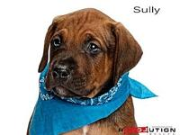 Sully's story Meet Londons seven puppies AJ, Ares, Mia,
