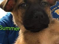 My story Summer is a happy 2.5 months old puppy. She is