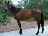 Summertime Groove (Groovy) is available for adoption as