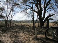 The Pocotaligo Tract consists of +/-190 acres of upland