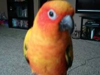 I have a hand tamed sun conure he is very pretty anf
