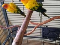Breeding pair , both 4.5 years old. they gave me 2