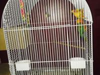 Sun conure pair proven.. This ad was posted with the