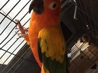 UPDATED! Offering out of all our sun conures. 4 Young