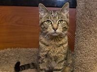 Sunflower's story Beautiful Sunflower, the brown tabby,