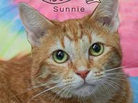 Sunnie's story Sunnie is a beautiful ginger  1