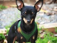 Sunny's story Sunny is a stunning youngster with