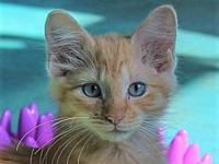 Sunny's story Adoption fee is $75, this kittens approx