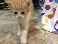 Sunny's story Sunny is an energetic boy. He has been