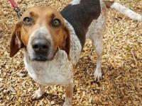 Sunny's story Hello! My name is Sunny and I am a hound