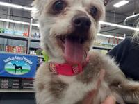 Say hello to Sunny! A 7 yr old Yorkie terrier mix ready